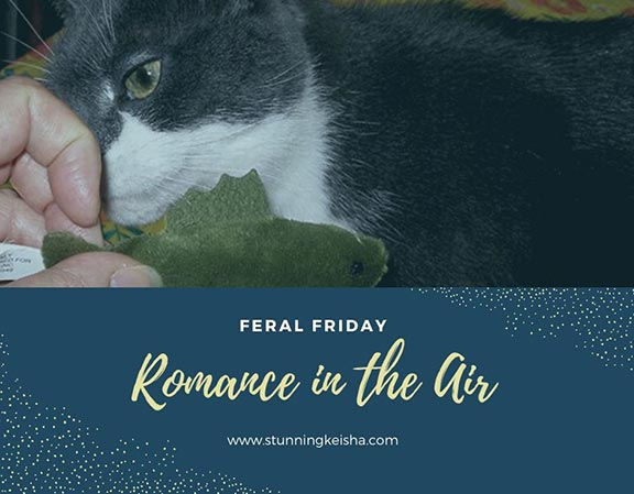 Feral Friday—Romance in the Air