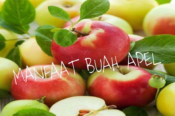 Manfaat Buah Apel Untuk Kesehatan Mari Kita Simak
