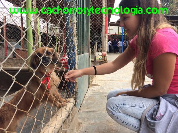 Voz Animal Perú es uno de los pocos albergues debidamente formados y organizados cachorros y tecnologia