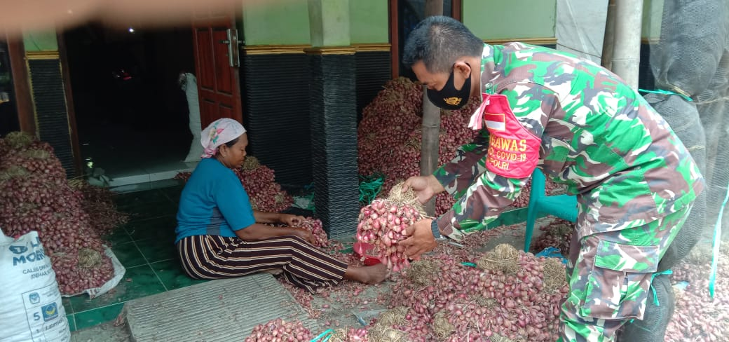 Harga Bawang Merah Anjlok di Demak, Babinsa Mulyorejo Berikan Motivasi Kepada Petani