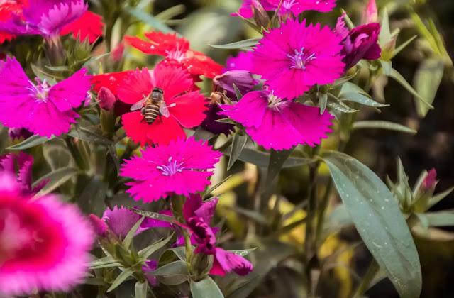 azalea,azaleas,iggy azalea,azalea care,azalea plant,azalea cuttings,azalea carey,azalea flower,azalea flowers,encore azaleas,azalea plant care,pruning azaleas,growing azaleas,#azalea,planting azaleas,how to grow azaleas,reblooming azaleas,how to plant azaleas,azalea sol,when to prune azaleas,azalee,azalea iggy,azalea bush,azalea tree,las azaleas,azalea enana,azalea riego,azaelea,free azaleas,azalea propagation methods,citrus azalea,encore azalea,azalea too big,azalea planta,indoor azalea
