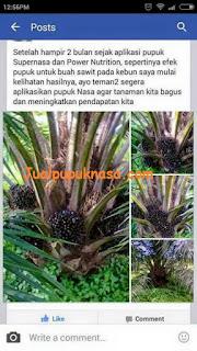 Kesaksian Produk Nasa Pada Tanaman Sawit Milik Bapak Mai Rizal, Aceh Selatan.