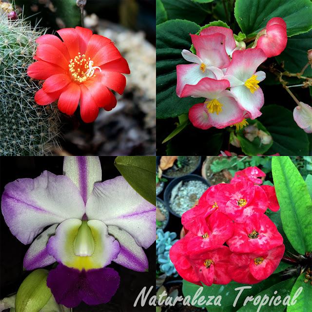 Foto donde se representan las plantas más famosas en la jardinería. Cactus, euforbias, orquídeas y begonias.