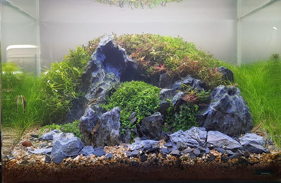 Hầu như đa số cây thủy sinh đều cần được cắt tỉa để đẹp hơn