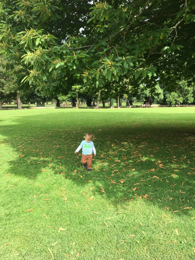 Tredegar-House-&-gardens-a-toddler-explores-toddler-on-grass-in-background-trees-