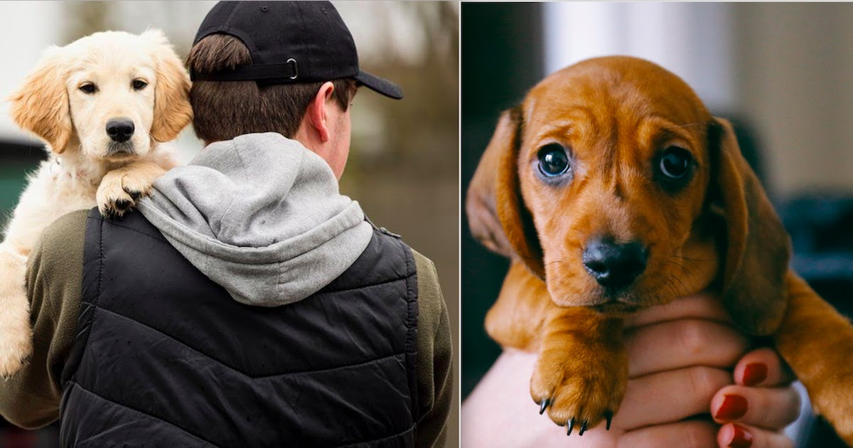 England To Make Pet Abduction A New Criminal Offence