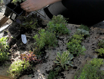 Atık Paletlerle Dikey Bahçe - DIY Projects of All Time