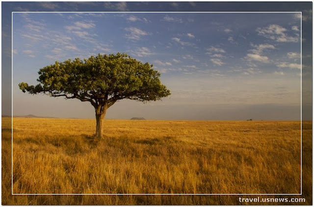 Serengeti National Park - Top 7 Best Places to Travel in The Middle East & Africa At Least Once