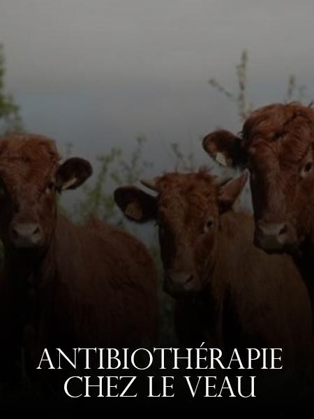Antibiothérapie chez le veau - WWW.VETBOOKSTORE.COM