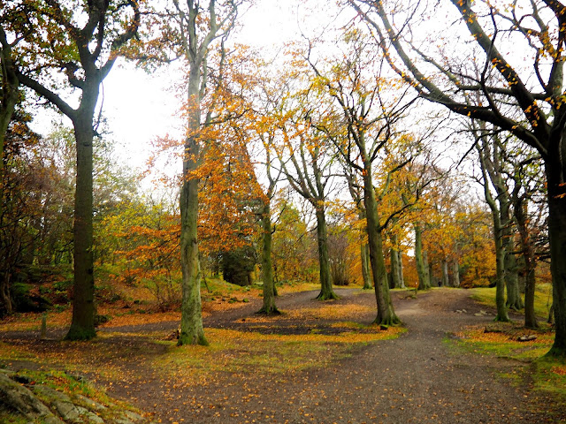 Autumn woodlands while hiking on Corstorphine Hill, Edinburgh, Scotland