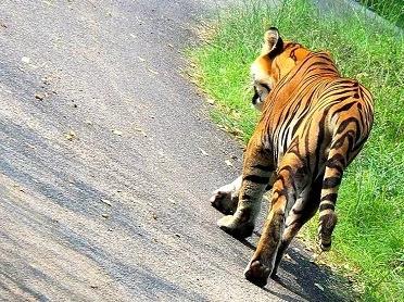 WAYANAD TIGER RESERVE