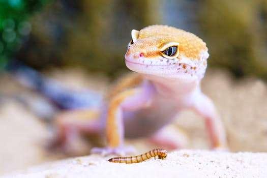Tokek adalah hewan yang masuk ke dalam kelompok reptil