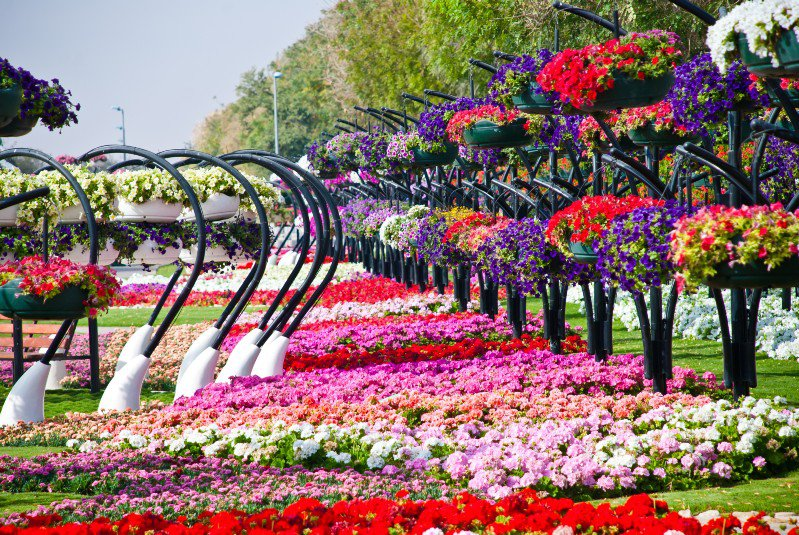flower park background - photo #13