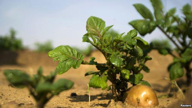 Israel, luz a las naciones, comparte conocimientos agrícolas para ayudar a África