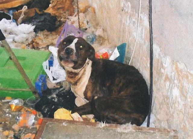 A szemét között, rövid láncon tartotta télen, nyáron kutyáját a kegyetlen lábatlani állatkínzó - fotók