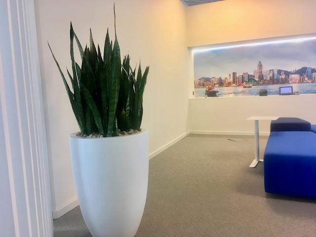 Planten voor kantoor huren prijzen op aanvraag