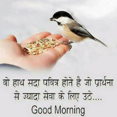 cute sparrow image with good morning whatsapp