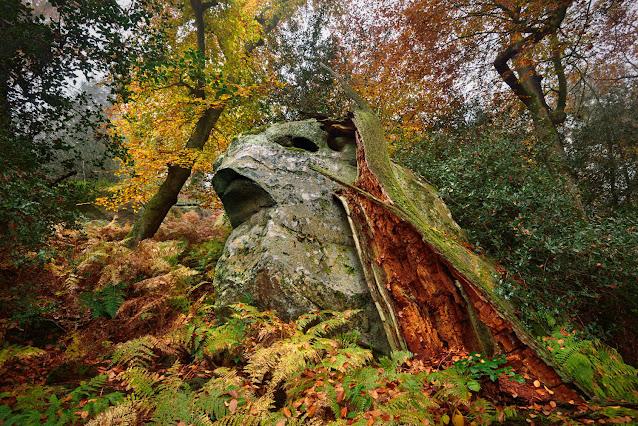 La Gorge aux Loups, forêt de Fontainebleau.