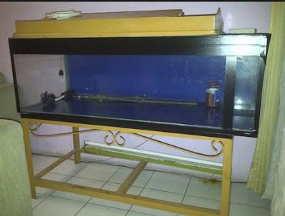 Aquarium EX Arwana