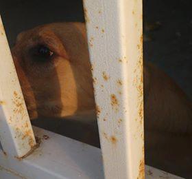 Encerrada en una casa abandonada llora toda la noche: se busca al dueño
