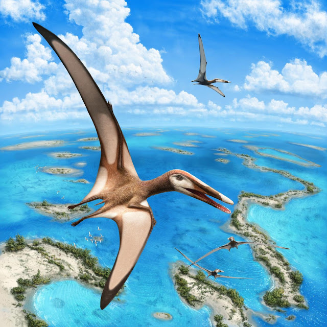 Paleontologists identify new group of pterosaurs