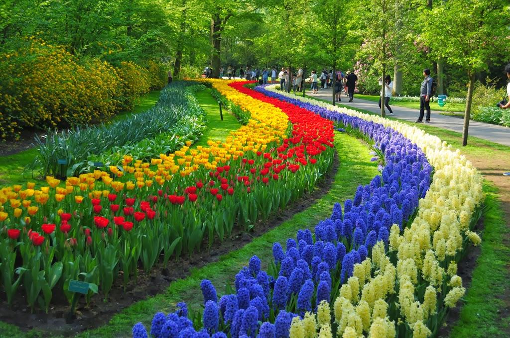 Jard nes keukenhof holanda - Jardines de tulipanes en holanda ...