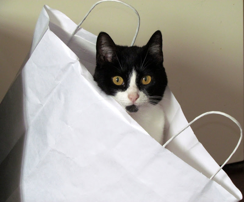 a cat in the bag