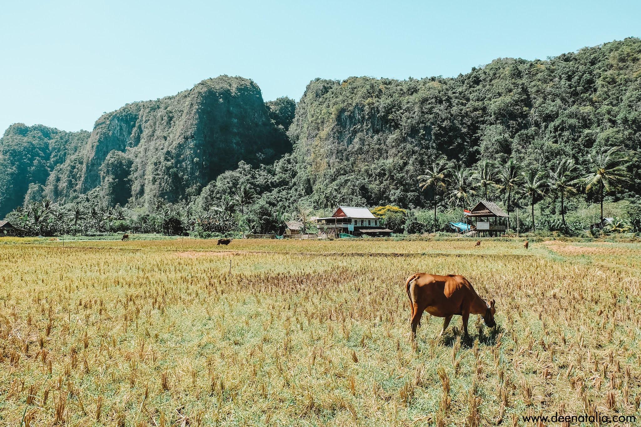 Desa Berau Rammang-Rammang