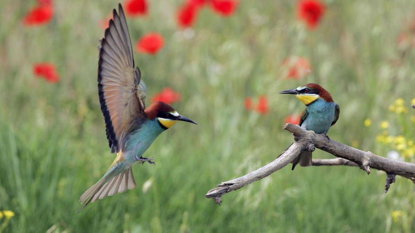 Cute Lovable Couple Wallpapers Cute Birds Hd Wallpapers Mass Wallpapers