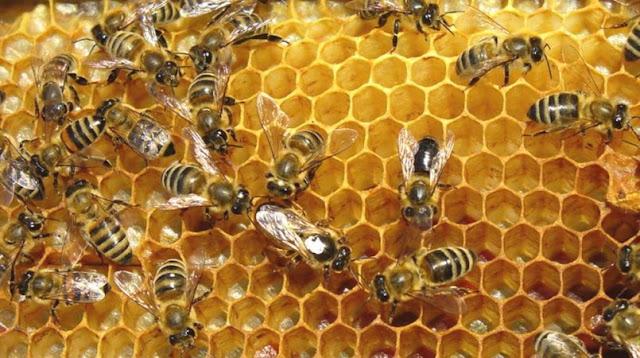 Η Γαλλία πέρασε νόμο που απαγορεύει όλα τα φυτοφάρμακα που σκοτώνουν τις μέλισσες