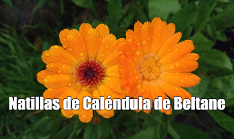 Natillas de Caléndula para la noche Beltane Celta