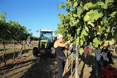 maria pia castelli vino naturale