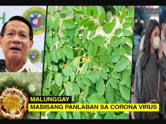 HEALTH TIPS: Malunggay, Mabisang Panlaban sa Corona Virus