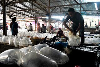 Pasar Ikan Hias Parung
