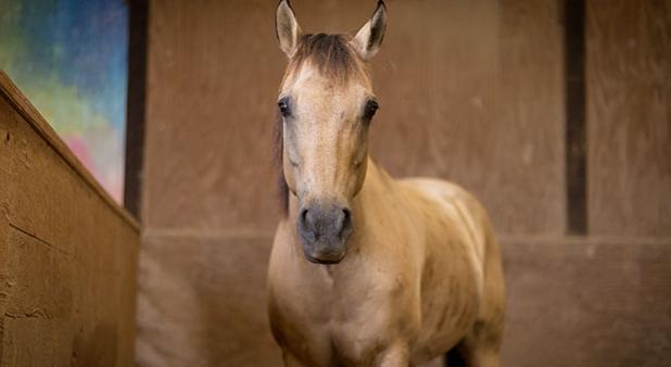 Sviluppare il legame tra uomo e cavallo
