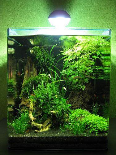 Bể thủy sinh cubic với rất nhiều loại cây