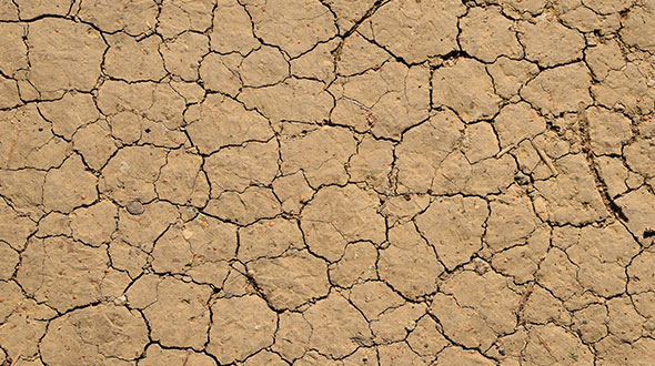 Clay soil is dense and does not drain well
