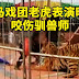Un domador es atacado por un tigre de circo en China