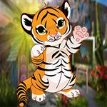 G4K Cute Baby Tiger Escape
