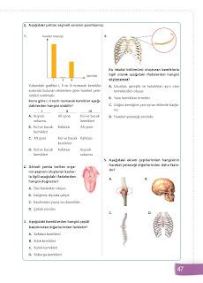 6. Sınıf Fen Bilimleri Ders Kitabı Cevapları Sevgi Yayınları Sayfa 47