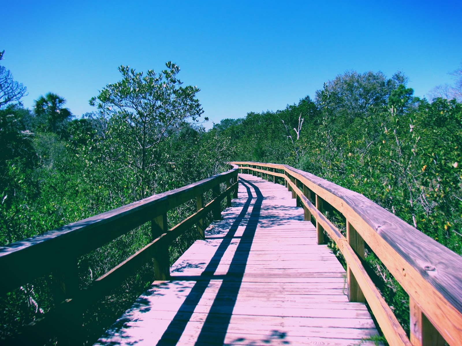 A Bridge in Hammock Park in Dunedin, Florida in the Park and Nature Preserve