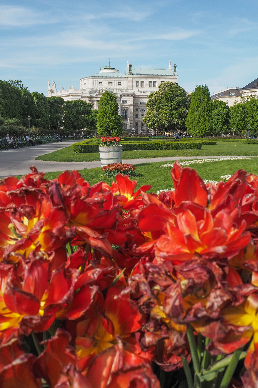 Volksgarten und im Hintergrund das Burgtheater