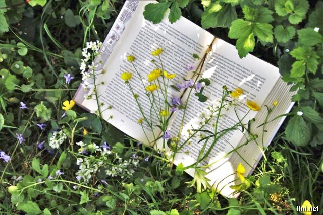 book và hoa