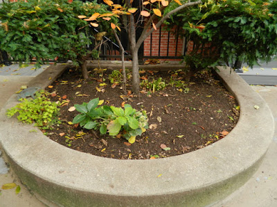 Toronto Downtown Fall Cleanup After by Paul Jung Gardening Services--a Toronto Gardening Services Company