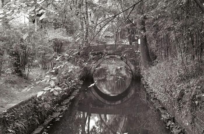 Chendgu, jardin botanique, © L. Gigout, 1990
