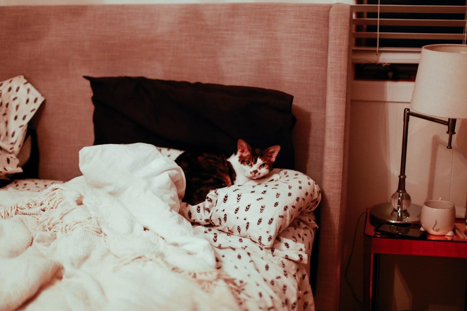 cute cat sleeping on pillow by zoe alexandriah
