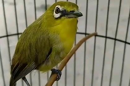 Tips dan Cara Mudah Menjinakkan Burung