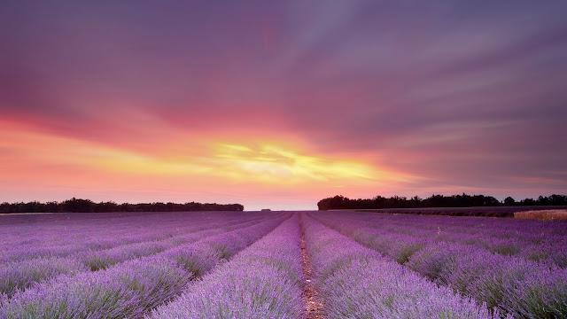 Lavandula_Fields_Sky_Clouds_Flowers_sunset_sunrise_3840x2160_4k_uhd_desktop_backrounds