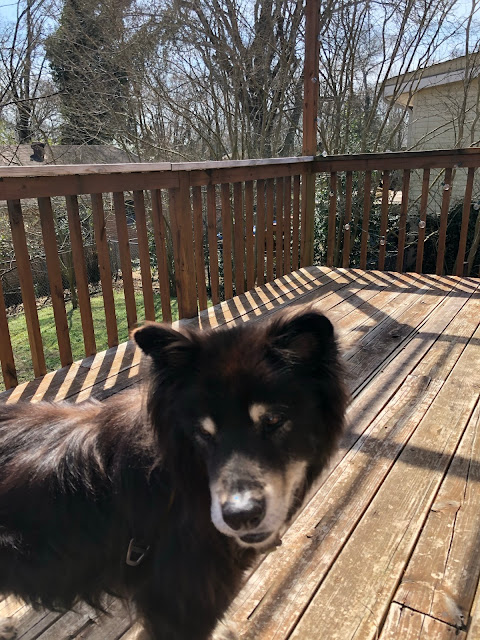 dog on a deck in the sun