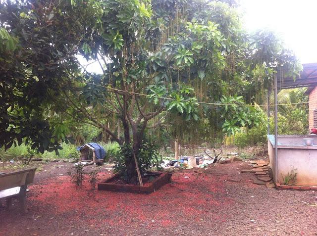Đất thổ vườn xã Bảo Quang Thị Xã Long Khánh 01